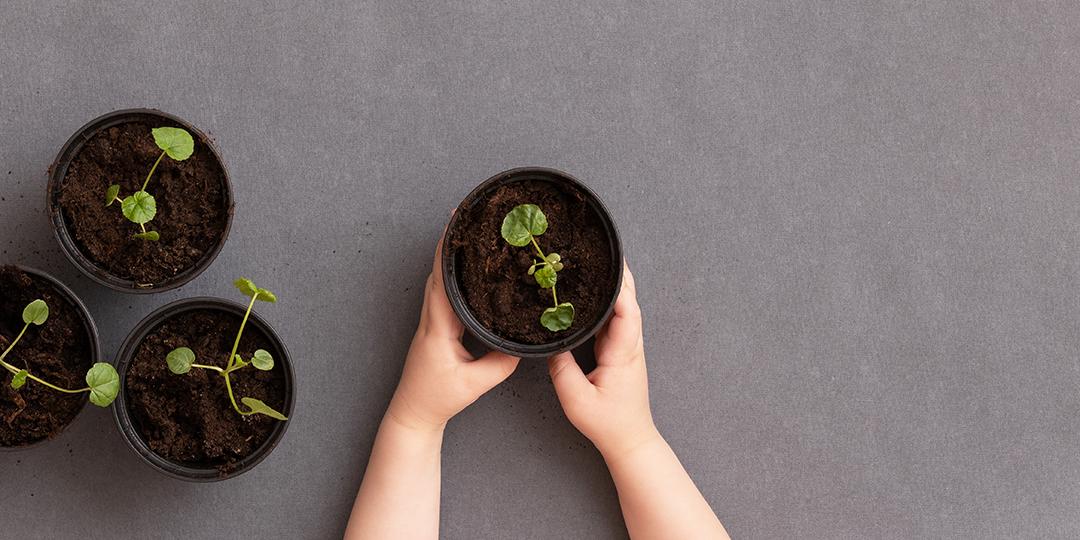 Odla och plantera på förskolan | Förskoleforum